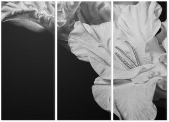 Triptych Black and white gladiolus