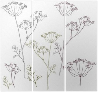 Dill or fennel flowers and leaves. Triptych