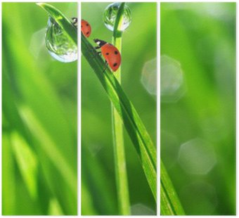fresh morning dew and ladybirds Triptych