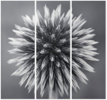 Purple Globe Thistle B&W Triptych