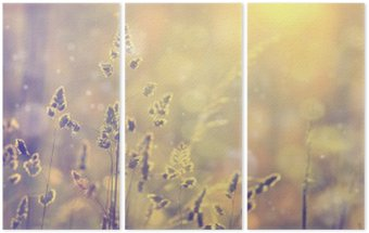 Retro blurred lawn grass at sunset with flare. Vintage purple red and yellow orange color filter effect used. Selective focus used. Triptych