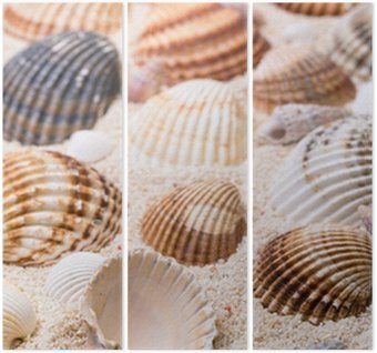 Sea shells with coral sand Triptych