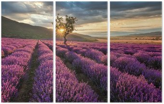 Triptych Stunning landscape with lavender field at sunrise
