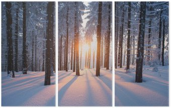 Sunset in the wood in winter period Triptych