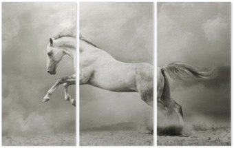 Triptychon Silber-weißer Hengst auf schwarz