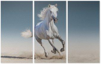 Triptychon Weißes Pferd laufen Galopp