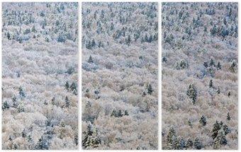 Triptychon Winterwald, Region Tver, Russland.