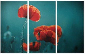 Triptych Amazing makové pole. Letní květiny.