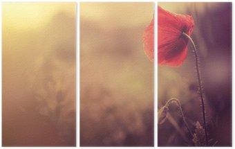 Triptych Divoký mák květiny