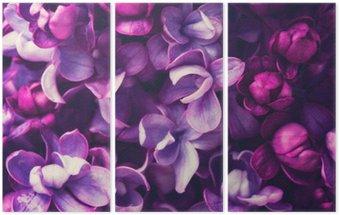 Triptych Lila květiny na pozadí