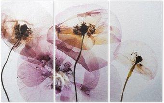 Triptych Suché máky