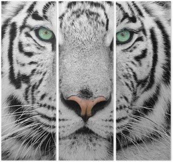 Triptych White tiger