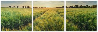 Triptyk Landsbygdens landskap med vetefält på solnedgången