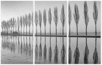 Triptyque Alberi riflessi sul lago all'alba in bianco e nero