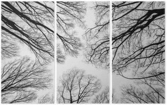 Triptyque Direction générale des arbres morts