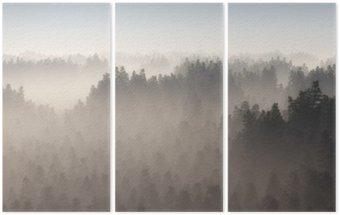 Triptyque Forêt de pins dense dans la brume du matin.