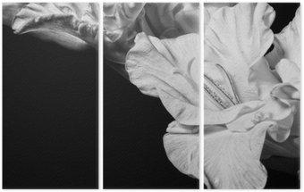 Triptyque Glaïeul Noir et blanc