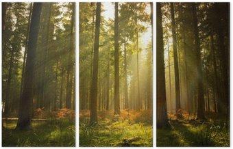 Triptyque Magnifique forêt