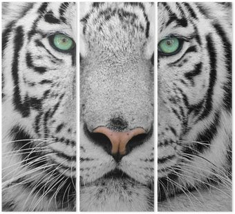 Triptyque White tiger