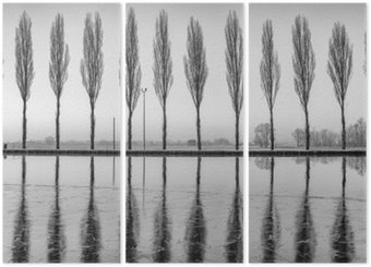 Trittico Alberi riflessi sul lago all'alba in bianco e nero