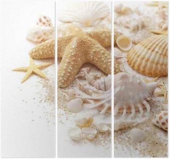 Trittico Conchiglie e sabbia su sfondo bianco
