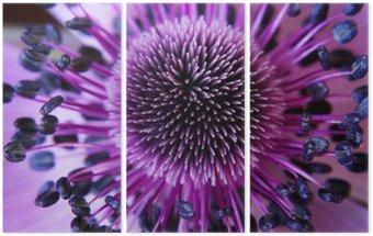 Tryptyk Anamone kwiat