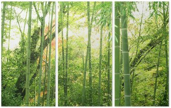 Bambus lesie