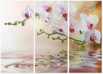 Tryptyk Biały orchidee na wody z kropli