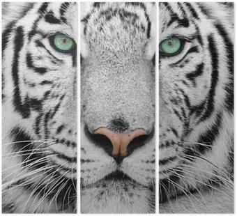 Tryptyk Biały tygrys