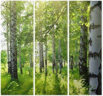 Tryptyk Brzozowe lasy z letniego słońca