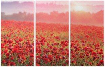 Tryptyk Czerwone pole maku w porannej mgle