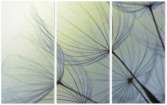 Tryptyk Dandelion nasion