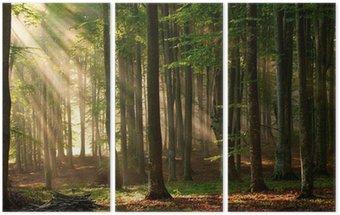 Tryptyk Drzewa las jesienią. charakter zielone światło słoneczne drewna tła.