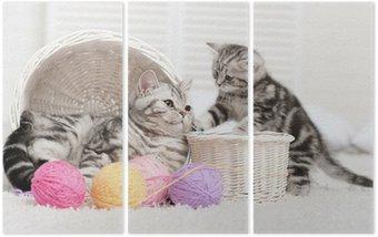 Tryptyk Dwa koty w koszu z kulkami z przędzy