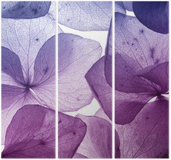 Kolorowy kwiat płatek zbliżenie