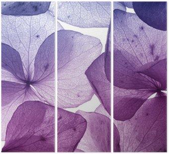 Tryptyk Kolorowy kwiat płatek zbliżenie