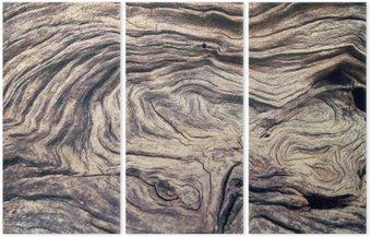 Tryptyk Kora drzewa tekstury drewna
