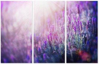 Tryptyk Kwiaty lawendy pola. rośnie i kwitnący lawenda