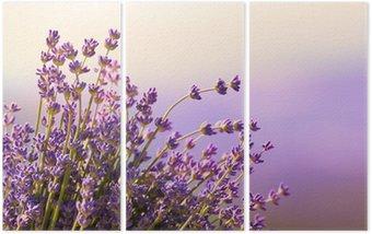 Tryptyk Kwitną kwiaty lawendy czas letni