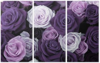 Tryptyk Różne kolory róż