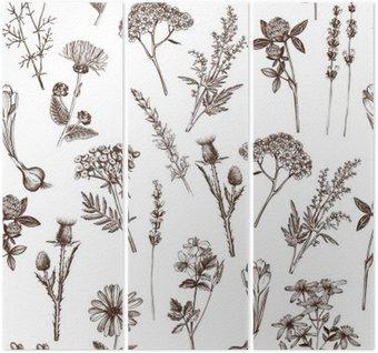 Wektor szwu z ręcznie rysowane tuszem szkic zioła lecznicze