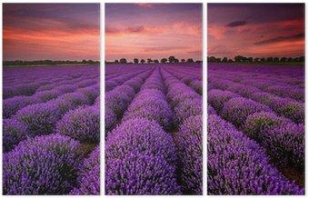 Tryptyk Wspaniały krajobraz z lawendowego pola o zachodzie słońca