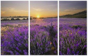 Tryptyk Zachód słońca nad pola lawendy