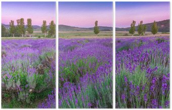 Zachód słońca nad polem letnich lavender w Tihany, Węgry
