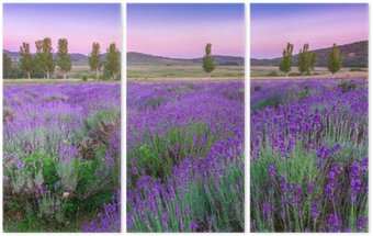Tryptyk Zachód słońca nad polem letnich lavender w Tihany, Węgry