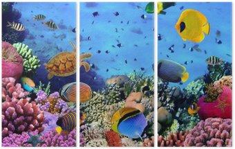 Tryptyk Zdjęcie z koralowców kolonii
