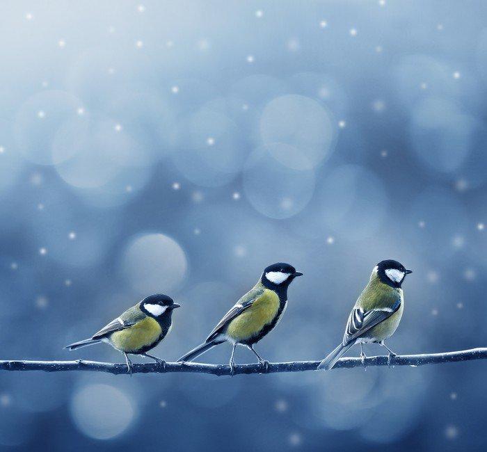 Obraz na Płótnie Trzy ptaki w zimie titmouse - Tematy