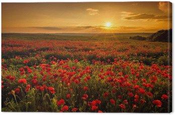 Tuval Baskı Gün batımında Haşhaş alan