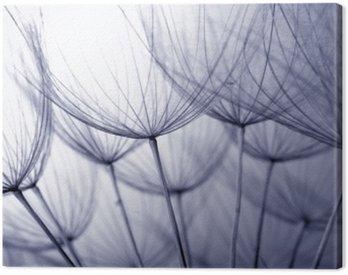 Tuval Baskı Karahindiba tohumları