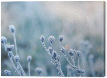 Tuval Baskı Kırağı ya da kırağı ile kaplı donmuş bitkiden soyut doğal arka plan